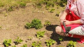 Femme avec l'outil de jardinage fonctionnant dans le jardin Images stock