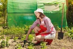 Femme avec l'outil de jardinage fonctionnant dans le jardin Photo stock