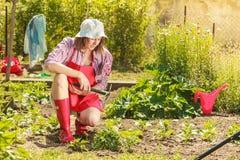 Femme avec l'outil de jardinage fonctionnant dans le jardin Image stock