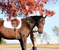 Femme avec le cheval de Brown dans l'automne Images libres de droits