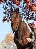 Femme avec le cheval de Brown dans l'automne Photos libres de droits