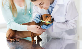 Femme avec le chien et le docteur à la clinique de vétérinaire images libres de droits