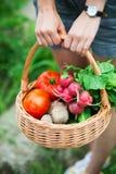 Femme avec le panier des légumes Photographie stock libre de droits