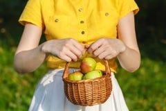 Femme avec les pommes mûres Image stock