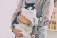 Femme avec son chat Photos libres de droits
