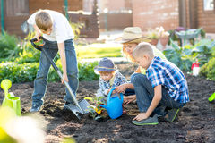 Femme avec trois fils d'enfants plantant un arbre et l'arrosant ensemble dans le jardin Photographie stock libre de droits