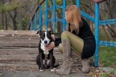 Femme blonde aux longues jambes frottant un chien de race sur le pont Image stock