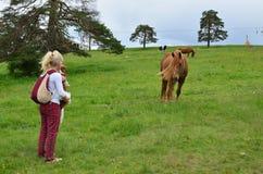 Femme, chien et un cheval dans la campagne Photographie stock libre de droits
