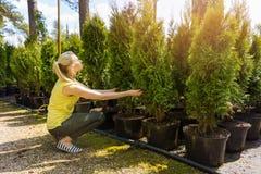 Femme choisissant l'arbre conifére à la pépinière extérieure d'usine photographie stock libre de droits