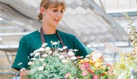 Femme commerciale de jardinier prenant soin de ses fleurs mises en pot photos libres de droits
