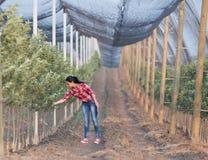 Femme d'agriculteur dans le verger photographie stock libre de droits