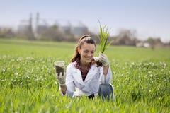 Femme d'agronome vérifiant la croissance de blé dans le domaine photographie stock
