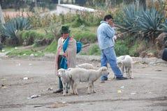 Femme d'Ecuadorian avec peu de moutons photos stock