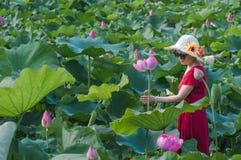 Femme dans l'étang de lotus Photographie stock libre de droits