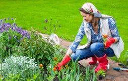 Femme dans l'image d'une plantation de jardinier images libres de droits