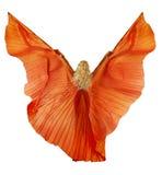 Femme dans la robe de tissu de danse de ventre comme ailes. Arrière, fond blanc Photos stock