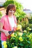 Femme dans les entretenir de jardin des fleurs Photo stock