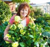 Femme dans les entretenir de jardin des fleurs Image stock