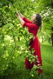 Femme dans les pommes rouges de cueillette de robe Photos libres de droits