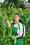 Femme dans un champ de maïs Image libre de droits