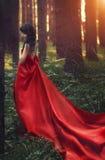 Femme dans une longue seule robe rouge dans la forêt fabuleuse et le myst photographie stock libre de droits