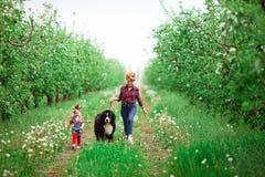 Femme de bébé avec le jardin de Berne de chien au printemps, pissenlits Photographie stock
