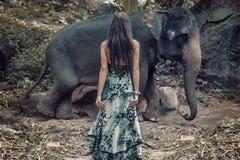 Femme de brune regardant fixement l'éléphant sauvage Photo stock