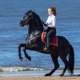 Femme de cheval et élevage du cheval andalou sur la plage Photographie stock libre de droits