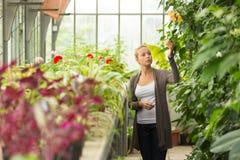 Femme de fleuristes travaillant en serre chaude Image stock