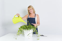 Femme de jardinage avec l'usine D'isolement sur le fond blanc Photos libres de droits