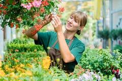 Femme de jardinier dans son magasin prenant soin de quelques fleurs photos libres de droits