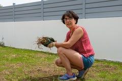 Femme de jardinier enlevant des mauvaises herbes sur la pelouse photo libre de droits