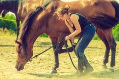 Femme de jockey prenant soin de cheval Photos stock