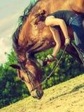 Femme de jockey prenant soin de cheval Photos libres de droits