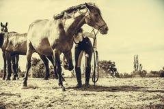 Femme de jockey prenant soin de cheval Images libres de droits