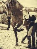 Femme de jockey prenant soin de cheval Photographie stock libre de droits