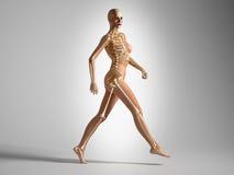 Femme de marche avec le squelette d'os. Photographie stock libre de droits
