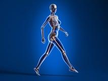 Femme de marche avec le squelette d'os. Images stock
