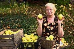 Femme de retraité dans des pommes de récolte de robe florale avec de pleins cratères en bois Photographie stock