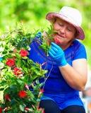 Femme de sourire appréciant l'usine de dipladenia dans le jardin Images libres de droits