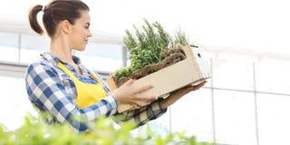 Femme de sourire avec la boîte en bois complètement d'herbes d'épice sur le fond blanc, jardin de ressort image stock