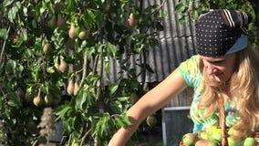 Femme de sourire de jardinier travaillant avec plaisir dans le jardin Moisson de fruits de poire 4K banque de vidéos