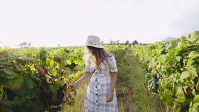 Femme de sourire marchant sur le vignoble dans éclairé à contre-jour banque de vidéos