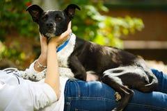 Femme de Younf peignant la fourrure d'un chien noir dans son jardin photo stock