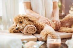 Femme donnant le massage de corps à un chien images libres de droits