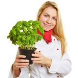 Femme en tant que cuisinier avec des herbes de basilic Photo libre de droits
