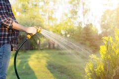 Femme enceinte arrosant l'arbre vert avec le tuyau Concept de jardinage Images libres de droits