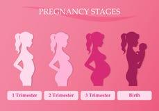 Femme enceinte - d'abord, deuxième et troisième trimestre Photo libre de droits