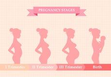 Femme enceinte - d'abord, deuxième et troisième trimestre Photo stock
