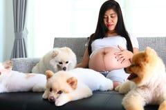 Femme enceinte et animaux familiers mignons de chien pomeranian dans le salon Photos stock